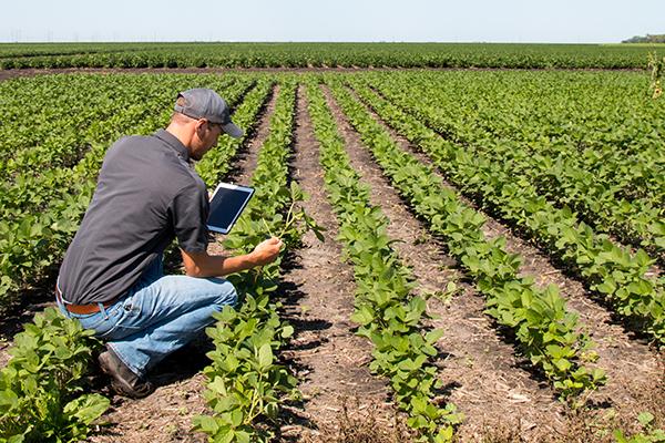 Ingeniero agronomo usando optiagro en el lote